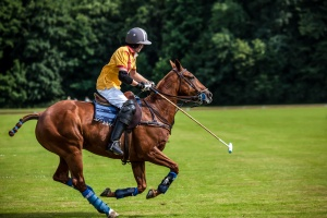 A Polo Player hits the Polo ball with a stick.